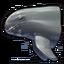 Pygmy killer whale 0