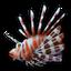 Lionfish 0