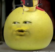 Grapefruitasajester