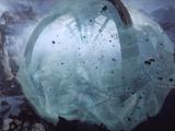 Shaper Ice Globe