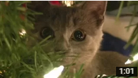 Mean Kitty Christmas Surprise