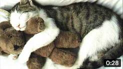 Котика стошнило :(