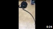 18+ Убери ребенка от экрана!!! Прикол со змеей ! Смотреть до конца 😀😀😀