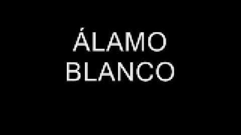 ÁLAMO BLANCO