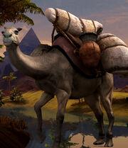 Camel big.jpg