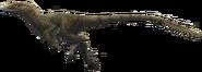 Utahraptor ostrommaysorum