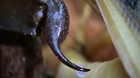Deathstalker_Scorpion_-_World's_most_venomous_scorpion!