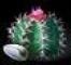 Cactus.jpg