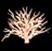 Branching Coral Reff.jpg