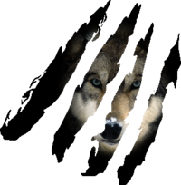 Test loup 2.png