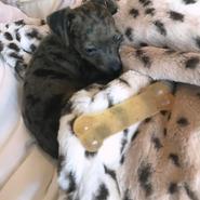 Ariana-grande-puppy-pignoli-4