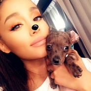 Ariana-grande-puppy-pignoli