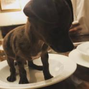 Ariana-grande-puppy-pignoli-1