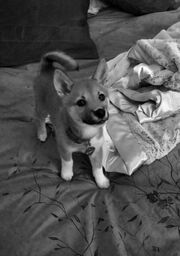 First picture of Fawkes.jpg