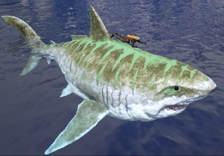800px-Sharky Size.png