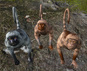 MonkeyASIG