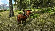 Equus large