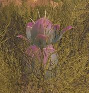 Wild Plant Species Y (Scorched Earth)