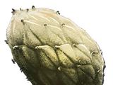 Растение Z