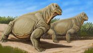 1200px-Moschops capensis