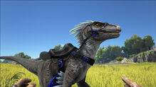 Raptor-Saddle-ARK-world.ru