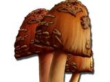 Редкий гриб