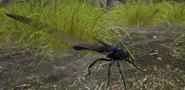 DragonflyASIG