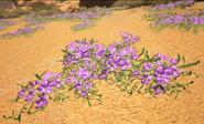 Purple Flowers Silk (Scorched Earth)