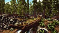 The Deep Woods (Ragnarok).jpg