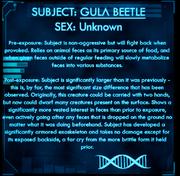 Dossier Gula Beetle.png