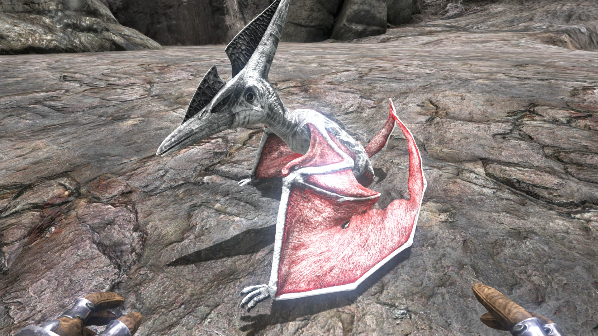 Ark Pteranodon Zähmen