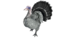 Super Turkey PaintRegion2.png