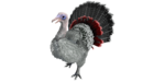 Super Turkey PaintRegion3.png