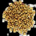 Sorghum Seed (Primitive Plus).png