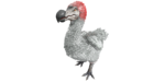 Dodo PaintRegion4.png