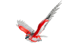 Snow Owl PaintRegion0.png