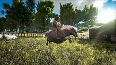 Ovis Rider.jpg