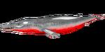 Basilosaurus PaintRegion5.png