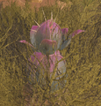 Wild Plant Species Y (Scorched Earth).png