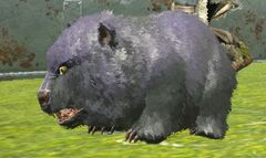 Chibi-Direbear in game.jpg