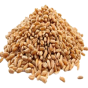 Wheat Seed (Primitive Plus).png
