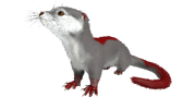 Otter PaintRegion4.png