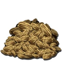 Graine de Carotte