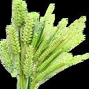 Fresh Barley (Primitive Plus).png