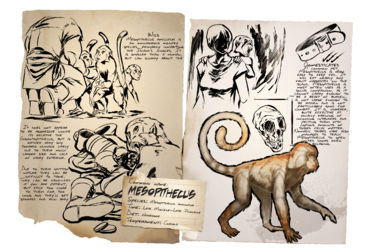 Dossier Mesopithecus.png