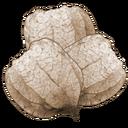 Leucanthemum Seeds (Mobile).png