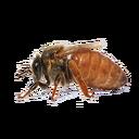 Queen Bee (Primitive Plus).png