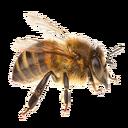 Worker Bee (Primitive Plus).png