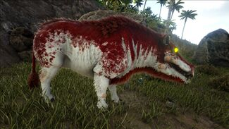 Alpha Daeodon Official Ark Survival Evolved Wiki Survival evolved, the daeodon eats superior kibble, raw mutton, cooked lamb chop, raw prime meat, cooked prime meat, raw. alpha daeodon official ark survival