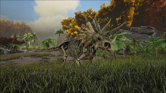 Skeletal Trike Image.jpg